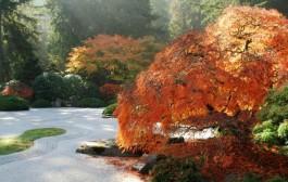 Phong cách tiểu cảnh sân vườn đẹp