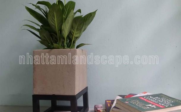 Top 3 địa điểm mua chậu trồng cây giá rẻ tại tpHCM