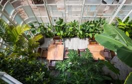 Mang thiên nhiên vào không gian nhà Bạn!!!